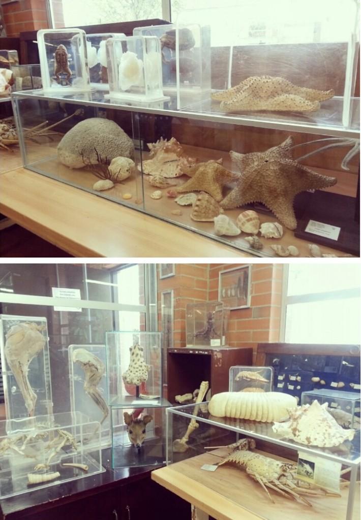 Algunas de las muestras que hacen parte del museo de la Universidad del Bosque