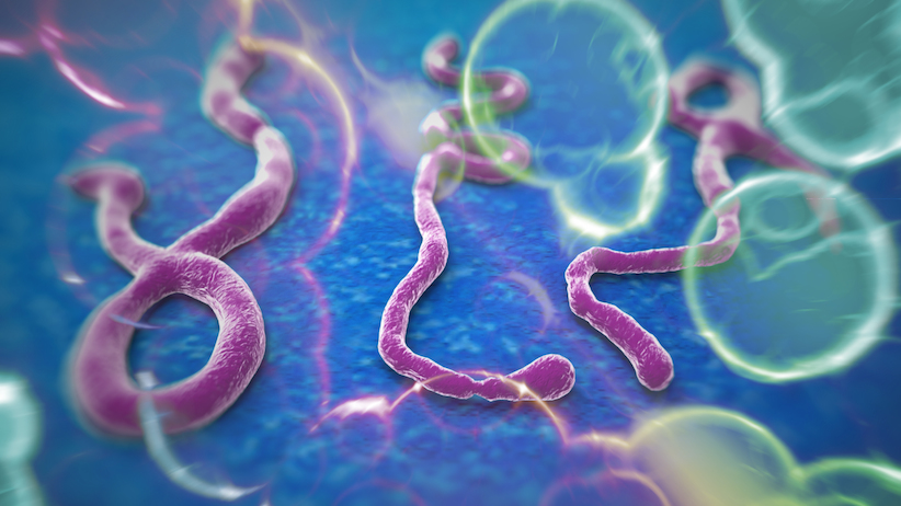 : imagen microscópica del ébola | Foto: http://columnazero.com/las-claves-del-ebola/