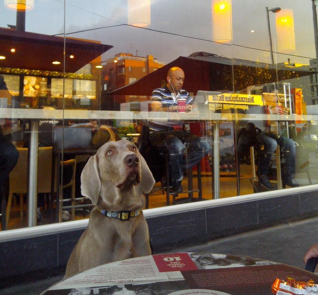 Obi, mascota de Juan Manuel Amado, disfrutando de uno de los espacios públicos que brinda la ciudad