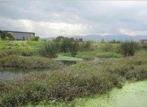 Humedal Capellanía, Parque Ecológico Distrital | foto humedalesbogota.com