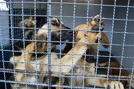 Perros y gatos esperan en diferentes refugios para ser adoptados.