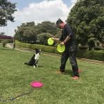Educa a tu perro de una manera diferente y dinámica.